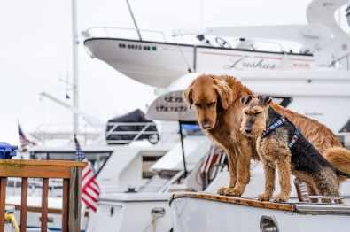 chien chat bateau