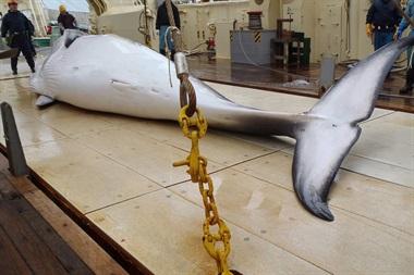 Matanza ballenas antartida