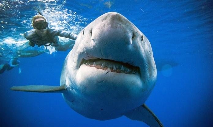 Tiburón Deep Blue
