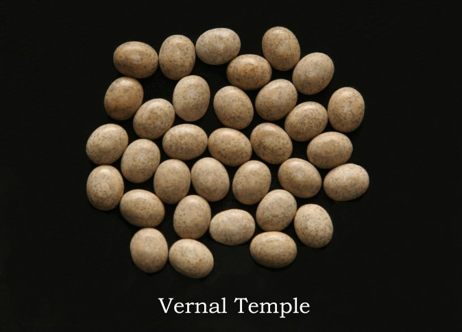 Temple stones from the LDS Vernal Temple by Nauvoo Remembered jewelry