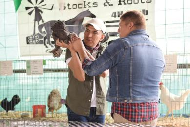 Navajo Times | Ravonelle Yazzie Kirby Curtis and Scott Willie judge the poultry category of the Navajo Nation Fair 4-H competition in Window Rock.