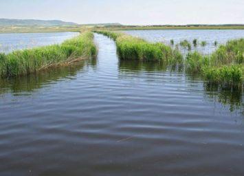 Laguna de Pitillas (mayo,2006)