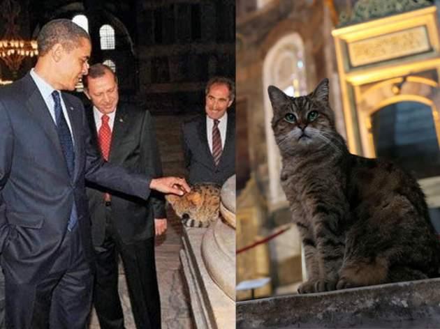 ओबामा भी फैन