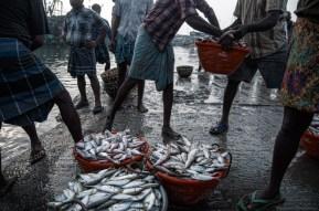 Kasimedu fishing harbour, Chennai by Naveen P M