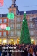 plaza-mayor-arbol-verde