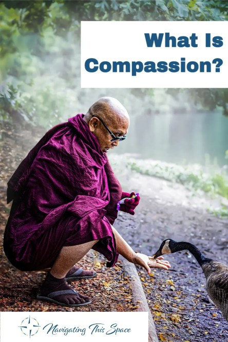 A monk shows compassion to a swan by letting it eat out of his hand