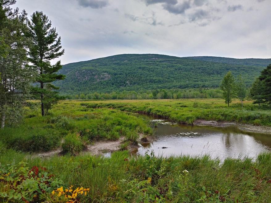 A pond, Acadia National Park