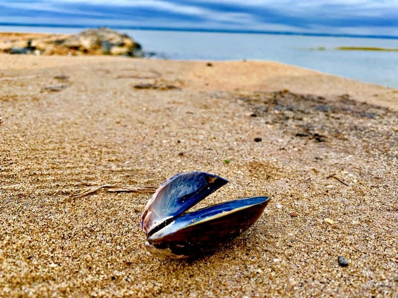 Welwyn Preserve, shell, beach