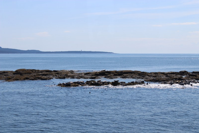 Seals at Egg Rock. Bar Harbor's Puffin and Lighthouse Cruise.