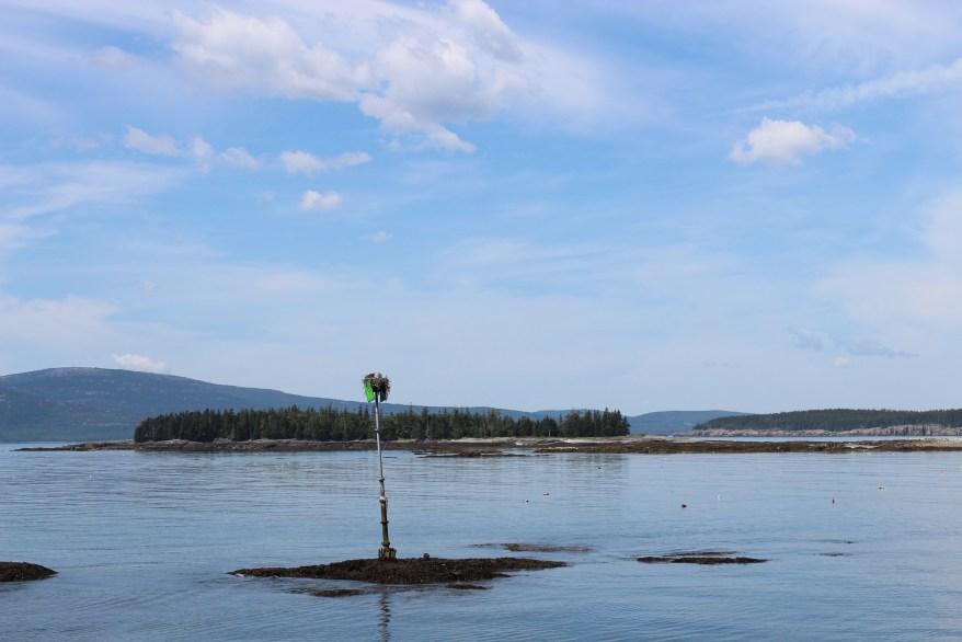 Osprey Nest, Maine