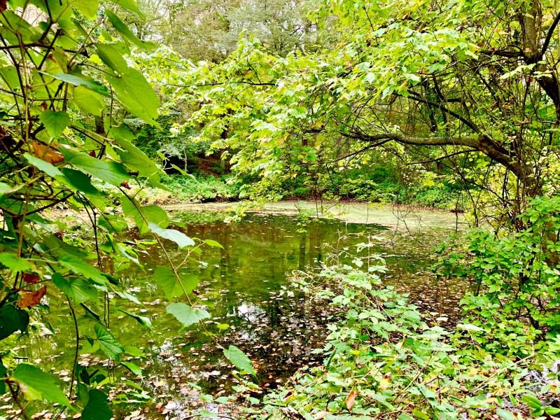 Welwyn Preserve. pond