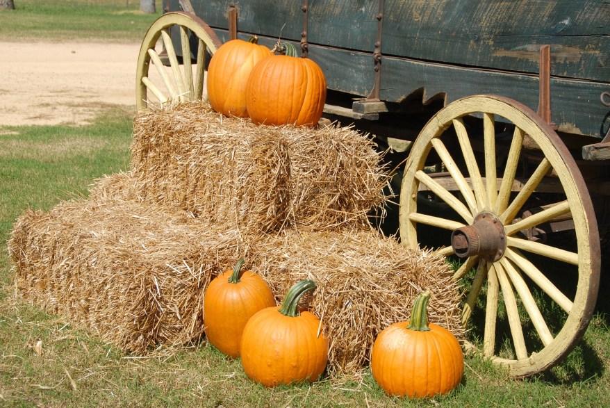 Pumpkins, NYS fall bucket list