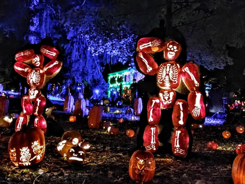 Skeleton Display at the Great Jack 'O' Lantern Blaze.