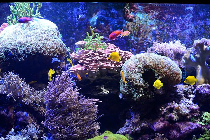 Niagara Falls Aquarium