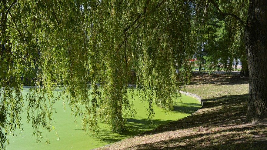 Leopold Park, best parks and gardens in Brussels