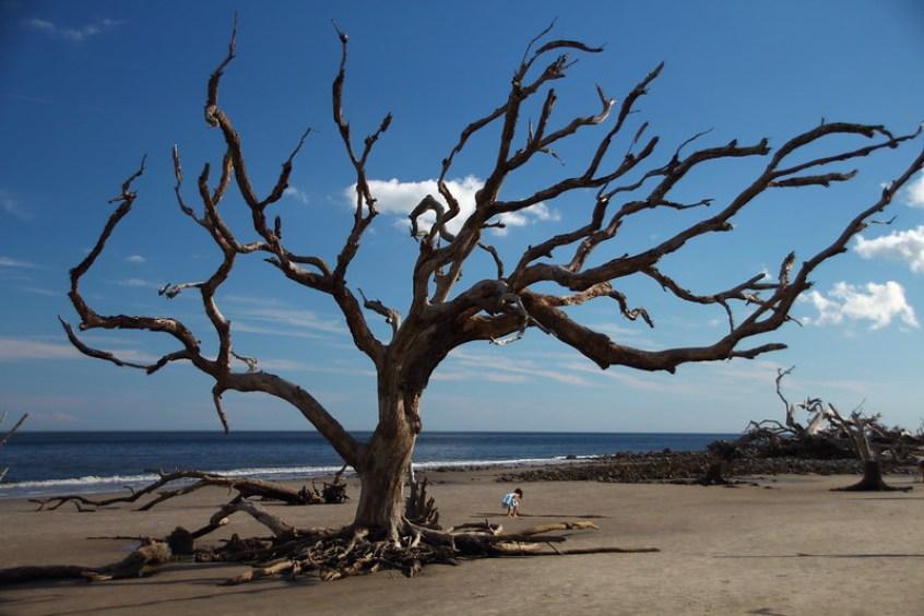 Driftwood Beach, Golden Isles, Georgia, warm winter getaways for families