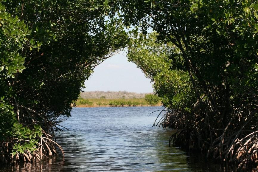 Everglades National Park, mangrove tunnels