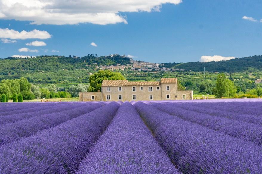 Lavender fields in Provence, mom's weekend getaways