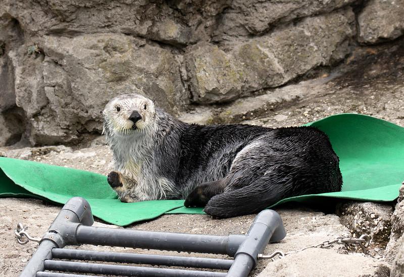 NY aquarium otter