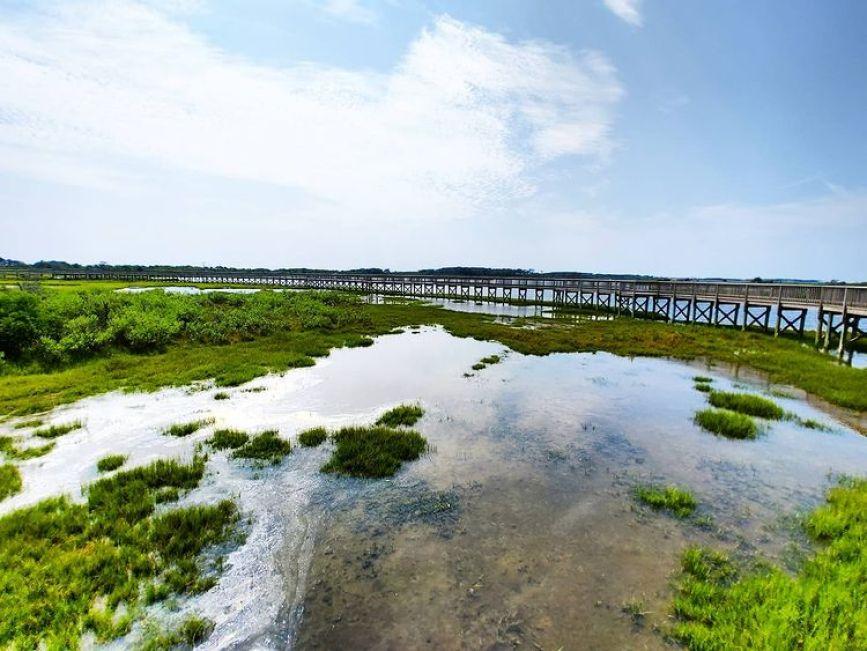 life of the marsh trail boardwalk, assateague island national seashore
