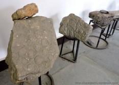 Fossil Stones (2)