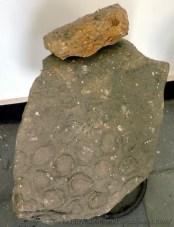 Fossil Stones (5)