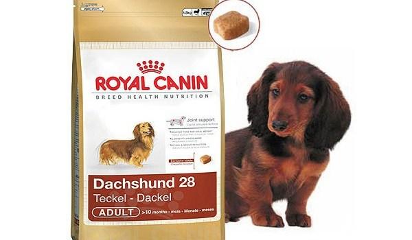 Преимущества сухого корма Роял Канин для собак