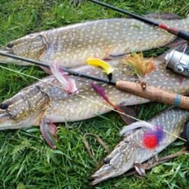 За щукой на рыбалку