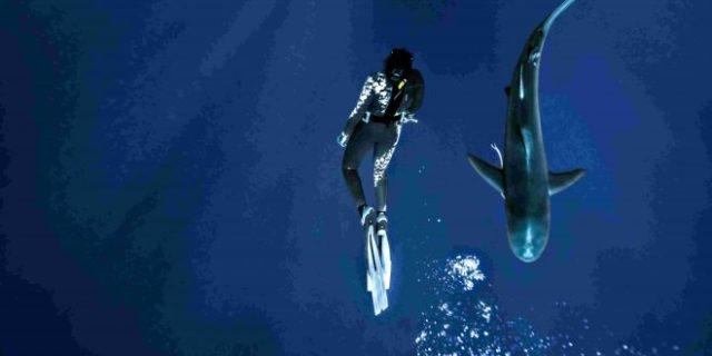 Σεμινάριο για τον καρχαρία στον Ν.Ο Σύρου