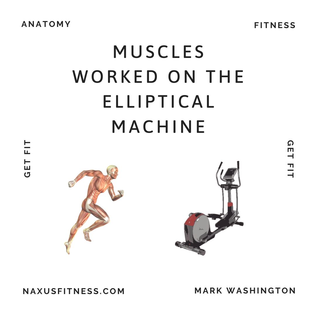Muscles Worked on Elliptical Trainers: An In Depth ...