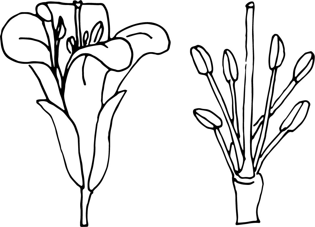 Easy Mustard Plant Diagram