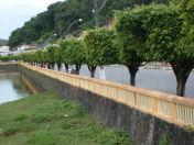 Árvores enfileiradas no passeio dos Coqueiros/Nazaré