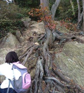 表口の登山道(立派な根っこ)