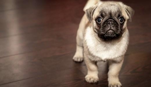 保護された犬の里親になる方法とは?注意点まとめ!
