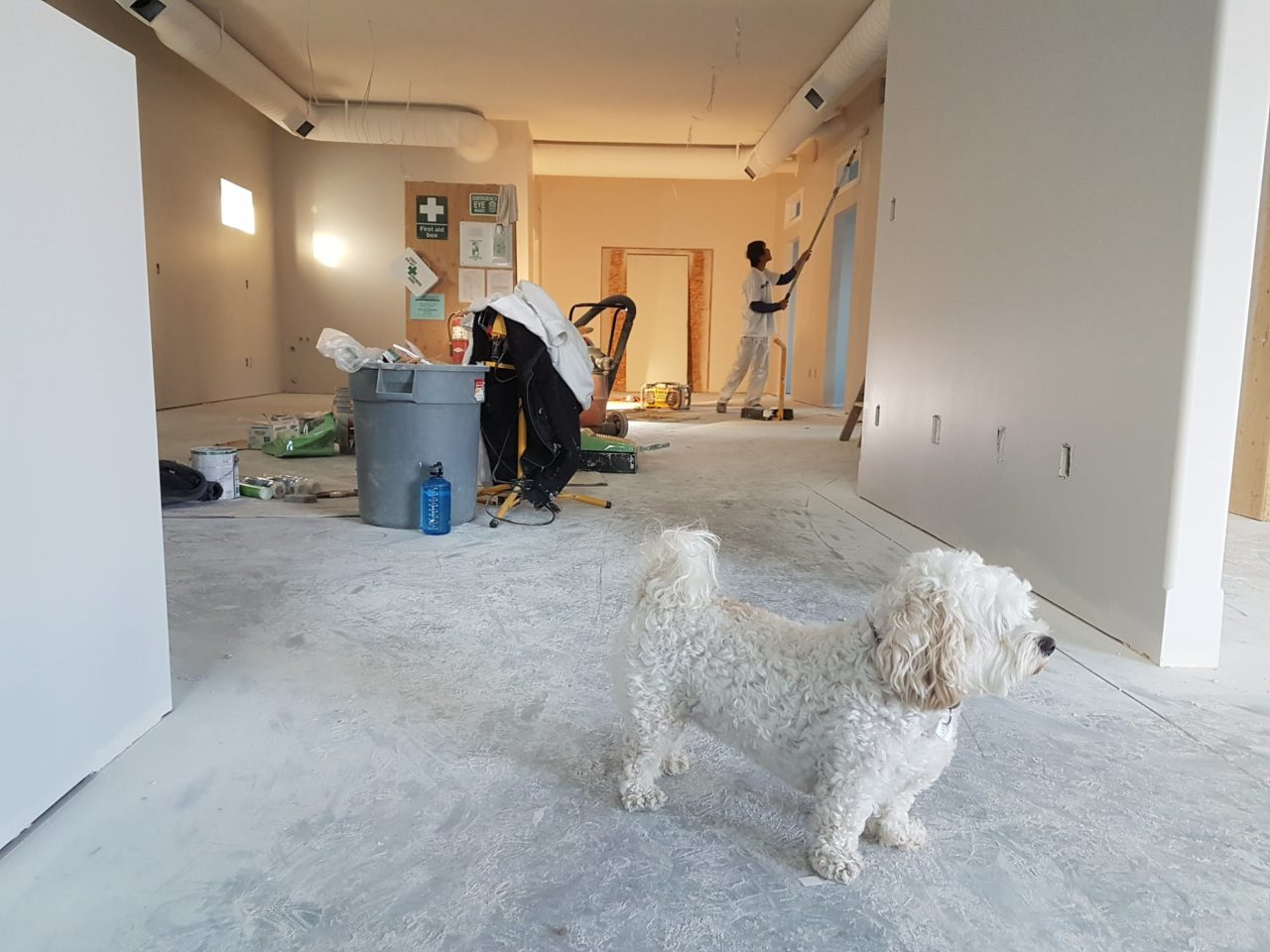 A white dog stands in front of two professional home remodeling contractors as they work.