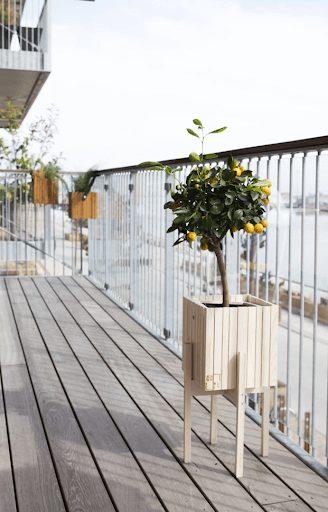 A kumquat plant in a pot on an outdoor deck