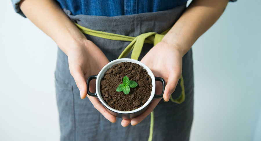 Woman holds small planted sprout.
