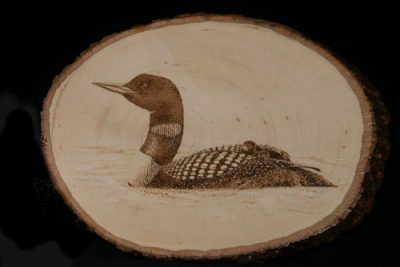 Loon with chicks