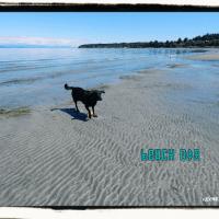 Beach Dog Vancouver Island
