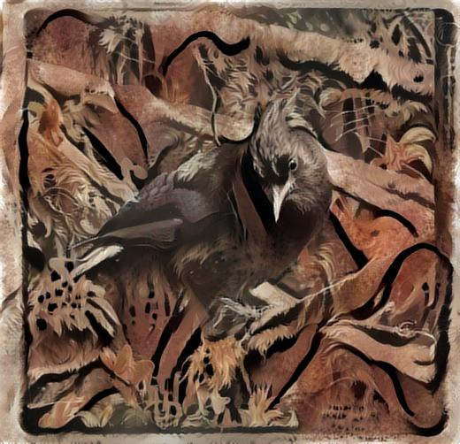 Stellars Jay deep dream