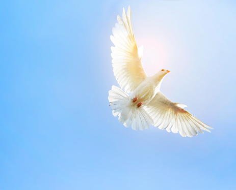 Detailed Explanation on the Gifts Of The Holy Spirit and Manifestations