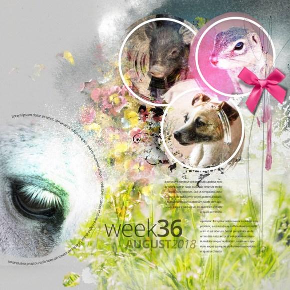 nbk-SOAW-TP-Week36-LO