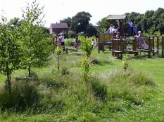 School- long grass and new trees