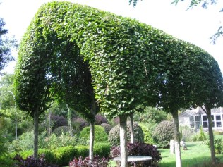 Pleached hornbeams forming a tunnel, via Catherine Wachs