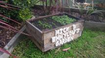 Latest Pallet Projects Planting School Garden