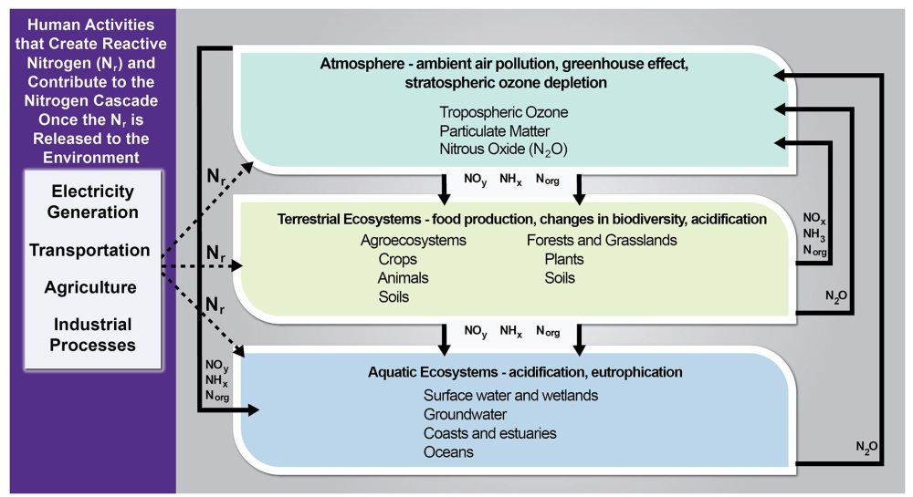 medium resolution of figure 15 2 human activities that form reactive nitrogen and resulting consequences in environmental