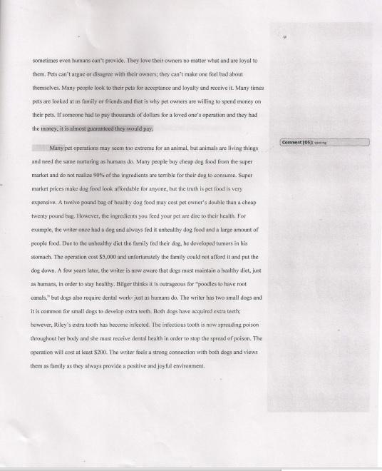 pet essay sample pet essay sample pet peeves essay essay