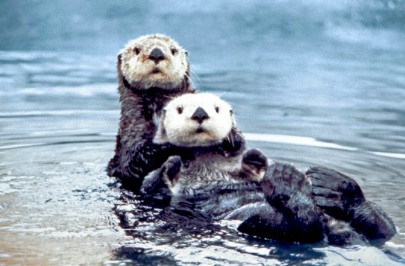 two sea otters