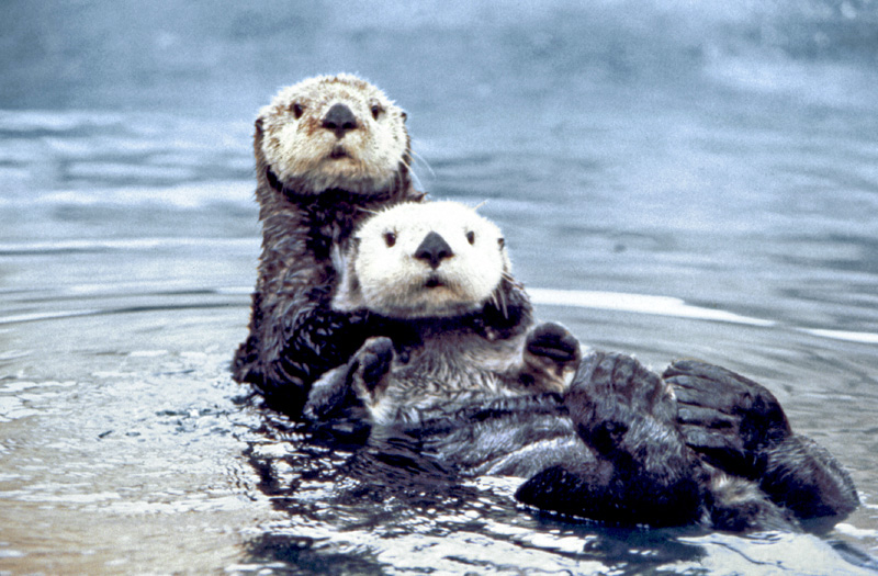 Twelve new NCBI annotations in RefSeq for otter, oyster & more