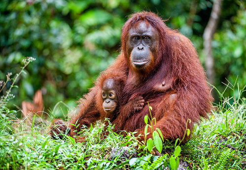 January and February annotations in RefSeq: orangutan, horse & more